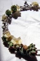 paperplantes2